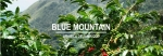 Le 'Blue Mountain' de Jamaïque