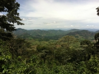 Le café du Nicaragua : une boisson d'exception