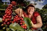 Le café du Salvador, cultivé dans les hauteurs