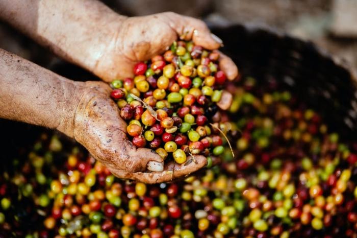 Café en grain du Rwanda